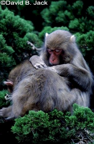 982889_JMacaques.jpg